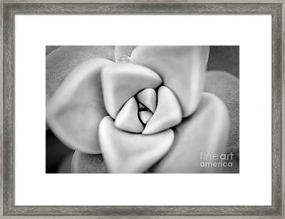 Ghost Petals Framed Print by Pixel Perfect by Michael Moore