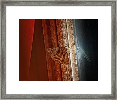 Ghostly Visage Framed Print by Susan Capuano