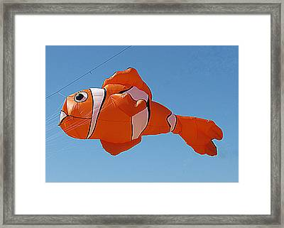 Giant Clownfish Kite  Framed Print by Samuel Sheats