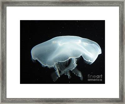 Giant White Jellyfish Framed Print by Darleen Stry