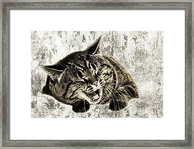 Giggle Kitty  Framed Print by Andee Design