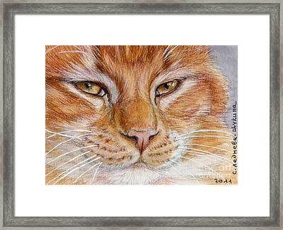 Ginger Cat  Framed Print by Svetlana Ledneva-Schukina