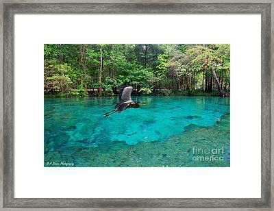 Ginnie Springs Framed Print by Barbara Bowen