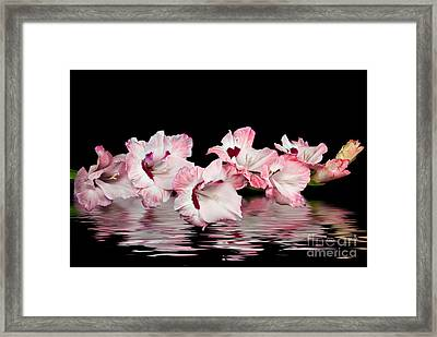 Gladiola Reflection Framed Print by Maria Dryfhout
