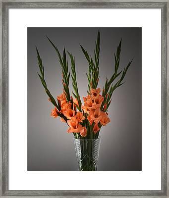 Gladiolus Portrait. Framed Print by Terence Davis