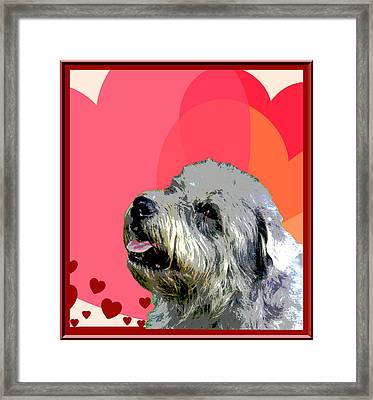 Glen Of Imaal Terrier Framed Print by One Rude Dawg Orcutt