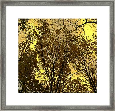 Glisten Framed Print by Ed Smith