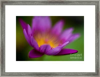 Glorious Lily Framed Print by Mike Reid