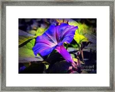 Glory Of The Morning Framed Print by Judi Bagwell