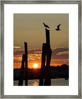 Gloucester Sunset Framed Print by Matthew Green