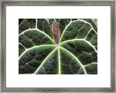 Glowing Leaf Framed Print by Rosalie Scanlon