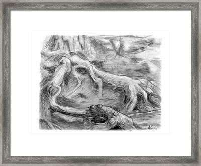Gnarled Framed Print by Adam Long