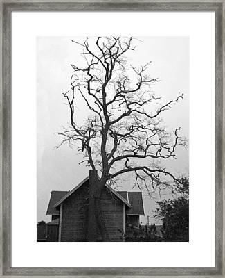 Gnarled Framed Print by Pamela Patch