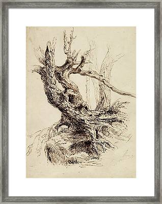 Gnarled Tree Trunk Framed Print by Thomas Cole