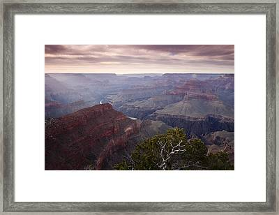 Gnarly Tree In The Canyon Framed Print by Andrew Soundarajan