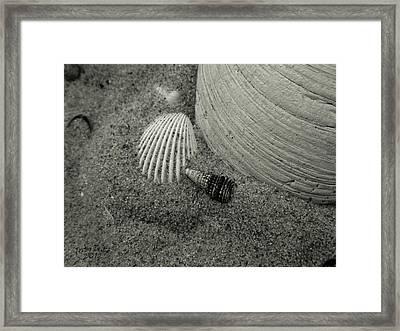God's Little Treasures Framed Print by Trish Tritz