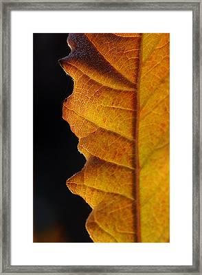 Gold Leaf - The Color Of Autumn Framed Print by Steven Milner