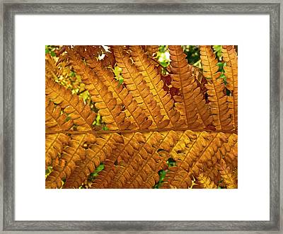 Gold Leaf Framed Print by William Fields