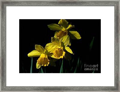 Golden Bells Framed Print by Lois Bryan