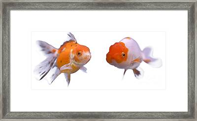 Eat Free Framed Print featuring the photograph Golden Fish  by Anek Suwannaphoom