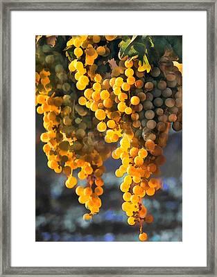 Golden Grapes Framed Print by Elaine Plesser