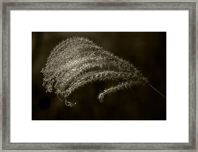 Golden Grass Framed Print by Tom Bell