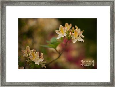 Golden Morning Framed Print by Mike Reid