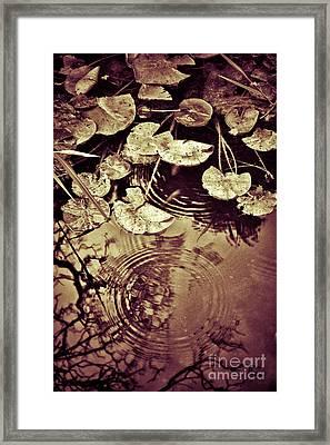 Golden Pond Framed Print by Silvia Ganora