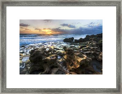 Golden Touch Framed Print by Debra and Dave Vanderlaan