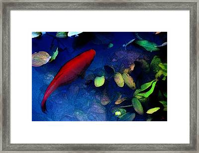 Goldfish Framed Print by Ron Jones