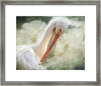 Good Grooming Framed Print by Laurie Search