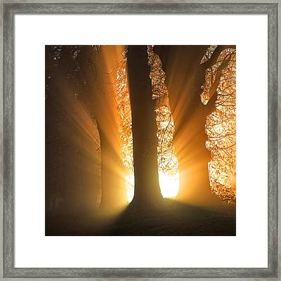 Good Morning Sunshine Framed Print by Martin Crush