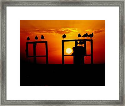 Goodnight Gulls Framed Print by Karen Wiles