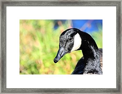 Goose Art Framed Print by Karol Livote