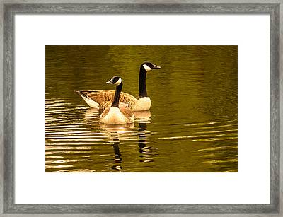 Goose Love Framed Print by Ken Beatty