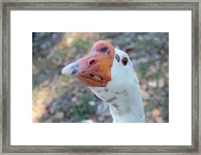 Goose Silvestre Framed Print by Lorenzo Muriedas