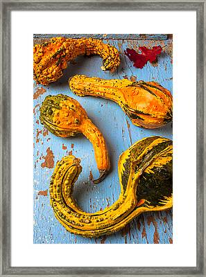 Gourds On Wooden Blue Board Framed Print by Garry Gay