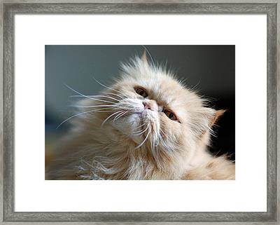 Gracie Framed Print by Lisa Phillips