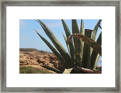 Graffiti Cactus Framed Print by Martin Krizik