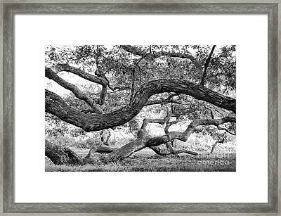Granby Oak Framed Print by HD Connelly