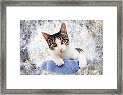 Grand Kitty Cuteness 2 Framed Print by Andee Design