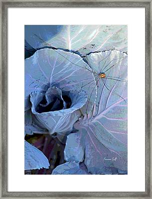 Granddaddy Long Legs Framed Print by Suzanne Gaff
