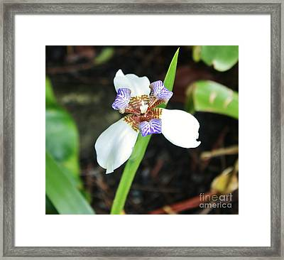 Grande Iris Framed Print by Craig Wood