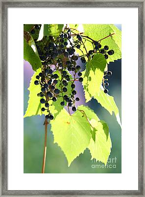Grapes And Leaves Framed Print by Michal Boubin