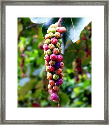 Grapes By The Sea Framed Print by Karen Wiles