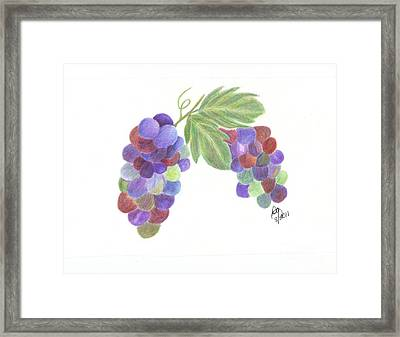 Grapes Framed Print by DebiJeen Pencils