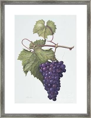 Grapes  Framed Print by Margaret Ann Eden