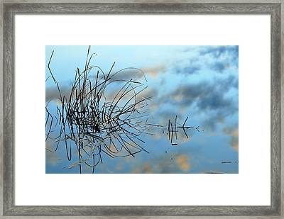Graphics In Nature Framed Print by Guido Montanes Castillo
