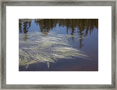 Grass On Water Framed Print by Peter Dyke
