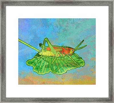 Grasshopper Framed Print by Mary Ogle